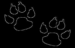 catpaw